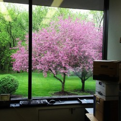The view from my new office  🌸🌸🌸