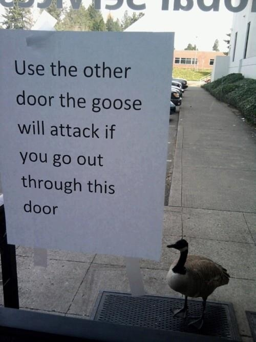 buzzfeed:  Why have a guard dog? In Canada, you can have a guard goose.