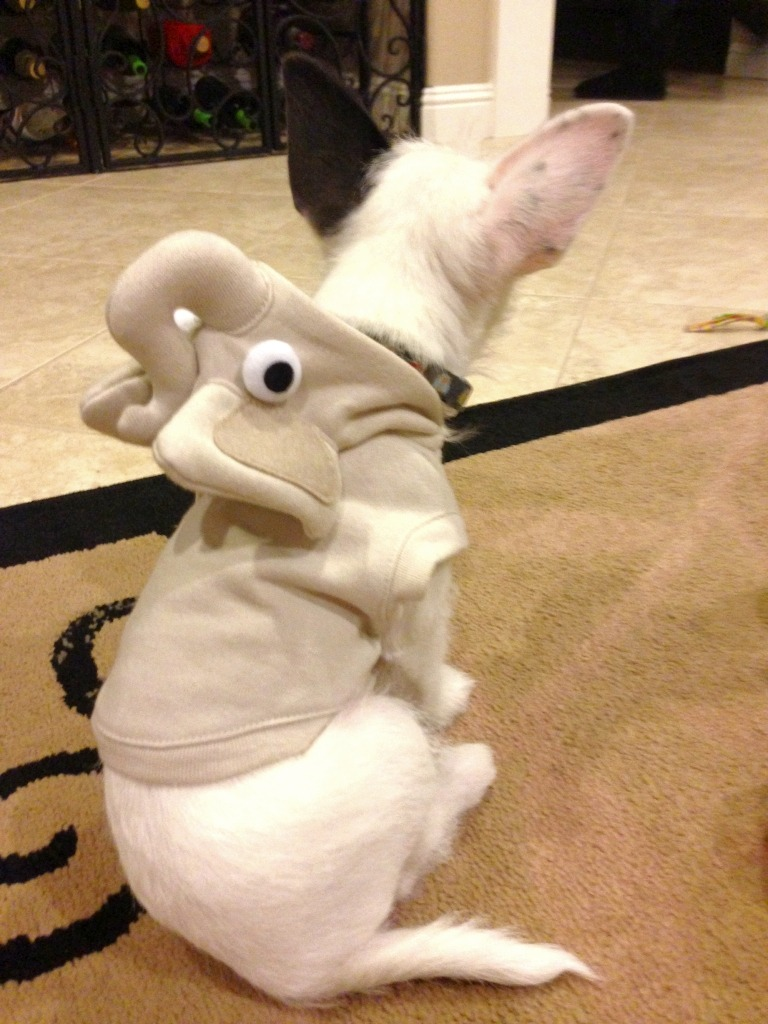 my… friends dog in an elephant outfit…