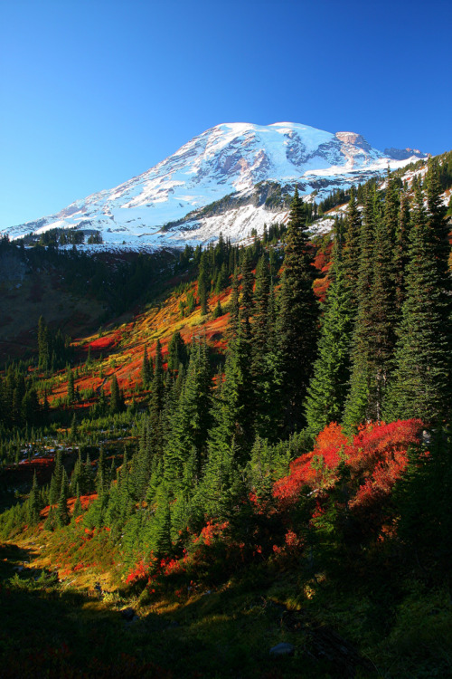 straangetimes:  Mt Rainier fall color (by jeremyjonkman)  Home. I miss it.