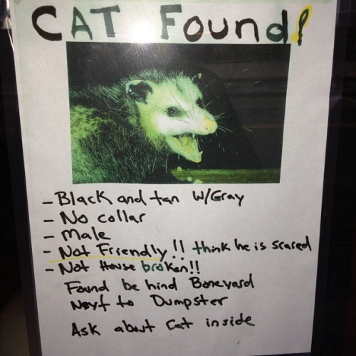 If you were looking for your cat it was found in ybor city apparently.. (at La Tropicana)
