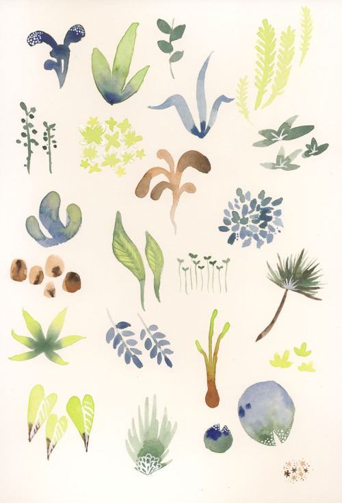 drawgabbydraw:  Little plant doodles. Watercolor, white ink on hot pressed paper.