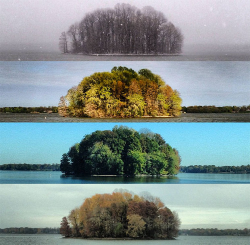 The Four Seasons of the Bush by Tyler Casson.
