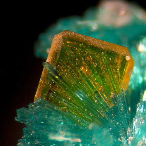 themineralogist:  Dioptase and Wulfenite from Arizona (by Bob Simonoff)