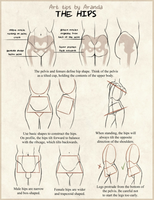 arandadill:  Hip Tips