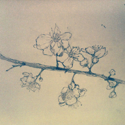 Spring twig has blossomed #adrawingaday