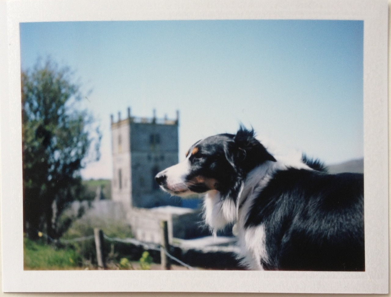 Bodhi in front of the cathedral in St David's - Wales
