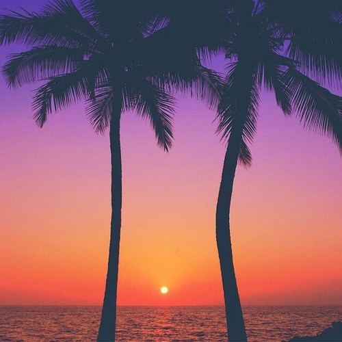 Sunset Palm Trees Tumblr Quotes