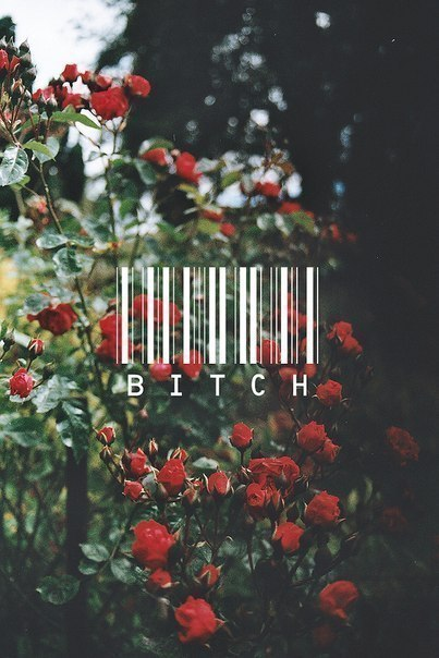 Bitch. on We Heart It - http://weheartit.com/entry/54577949/via/unicornsandharrypotter