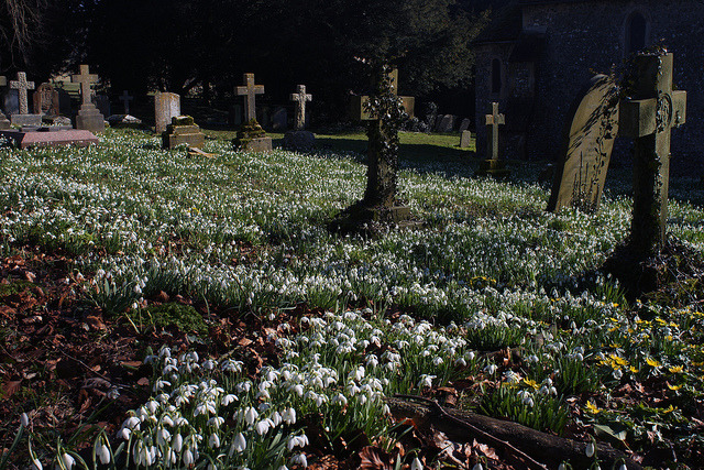 Snowdrops and the dead on Flickr.From a few weeks back on a killer hike in more ways than one.  I know it might have looked like it over the last few weeks, but 'And the Moon Rose' has not been orphaned.  It's just been good to pursue other interests for a while at least.  Hope everyone is doing well.