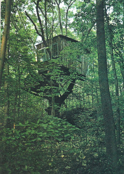 one day im gonna design the sickest tree house ever.