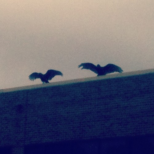 Just 2 vultures on top of an abandoned hospital…nothing ominous about that. Nope, I'm not even a little frightened .