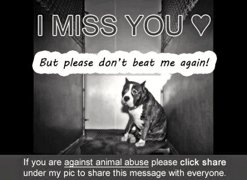 Please Share If You're Against Animal AbusePlease ShareView Postshared via WordPress.com
