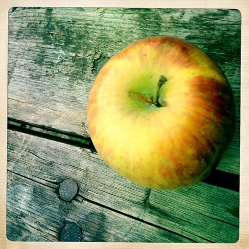 Apple #iphonesia #instagram #statigramt #phototoday #color #popular #instamood #bestoftheday #picooftheday #igdaily #webstagram #instadaily #popularpage #instago #instalove #instabest #photowall #photo_cafe #instacool #instawaw #instacanvas #apple