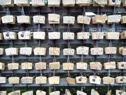 Prayers at Meiji Shrine