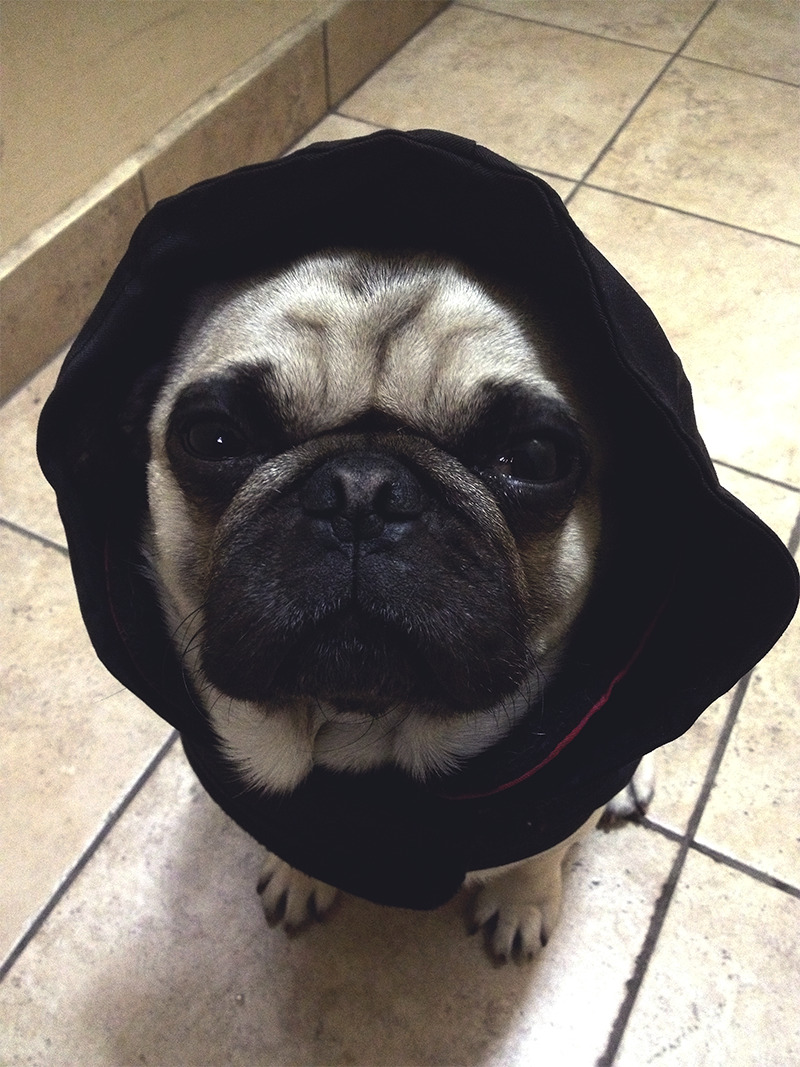 homerjaypug:  i can't pee or poop in the rain ;-;