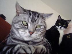 love LOL funny cute creepy cats stare glare