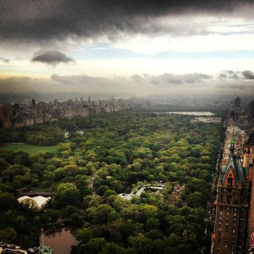newyorkcityfeelings:     Central park is my jungle (by New York City)