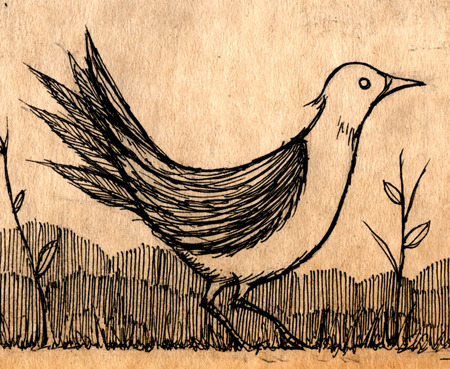 joncarling:  bird
