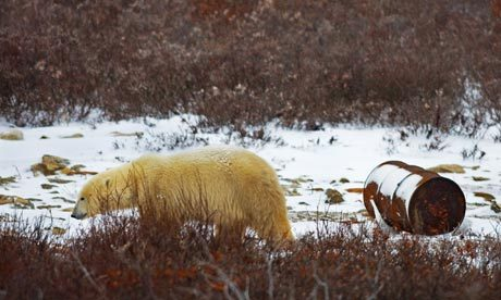 "rhamphotheca:  CITES voted against protecting polar bears on an international level, here's a story from a couple of days ago (3/5/13), in the Guardian UK, telling you why they should have… ____________________________________ US and Russia unite in bid to strengthen protection for polar bears Proposal to ban international commercial trade in polar bear products sets up showdown with Canada over key Cites vote by Damien Carrington A fight to protect polar bears from Arctic hunters has led cold war foes the US and Russia to unite against Canada ahead of a key international vote this week. The bitter row is over the 600 or so of the polar species killed each year by Canadian hunters, most of which are exported as bear skin rugs, fangs or paws. Diplomatic relations became even frostier on Tuesday, when the European Union attempted to block the US proposal to outlaw the export trade, which is strongly supported by Russia. The US is adamant the trade is unsustainable. ""The best scientific evidence says two-thirds of the polar bear population will be gone by mid-century, so how can you have a sustainable commercial trade?"" asked Dan Ashe, head of the US delegation to the 178-nation meeting of the Convention on the Trade in Endangered Species (Cites) being held in Thailand. Canada, home to about three-quarters of the world's 20,000-25,000 remaining polar bears, is the only country that allows the export of polar bear products. Its delegates argue there is ""insufficient scientific evidence"" that polar bear populations will decline by more than half in the coming decades and that trade is ""not detrimental to the species"". They say hunting and trading in polar bears is ""integrally linked"" with Inuit subsistence and culture… (read more: Guardian UK)                 (photo: Paul J Richards)  Russia teams up with the US to save polar bears from Canadians… everything about this rules."