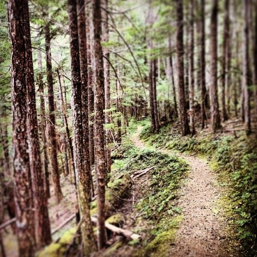 ridepdw:  One more from this weekends Mt. Hood National Forest exploration trip. Still Creek, Trail # 780, 7 am.