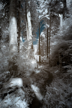 visionitaliane:  Baker Lake path, WA, USA by Visioni Italiane Infrared photography