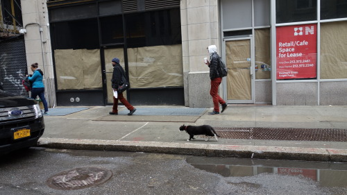 I'm just a cat, wandering through the Garment District, minding my own business…