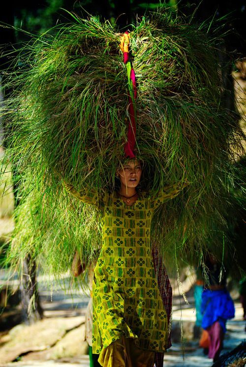 Woman carrying grass bought from a market to be used as cattle feed,india