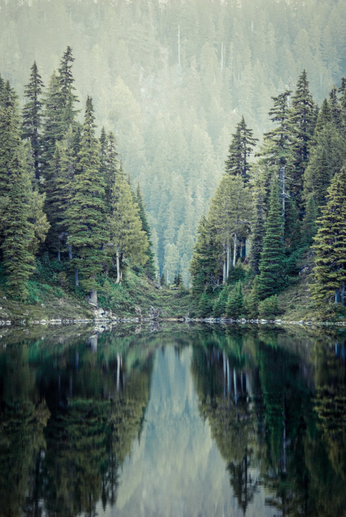 vacants:  Green Trees (by photosbysomeguy)