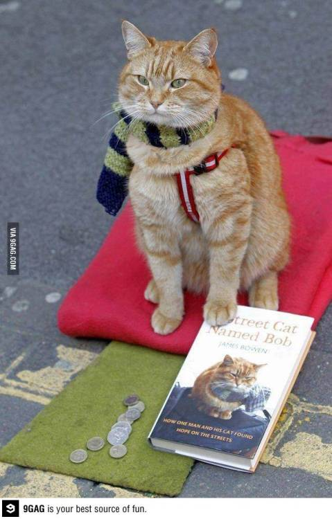 writerman-js:  (via 9GAG - Street cat at its finest)