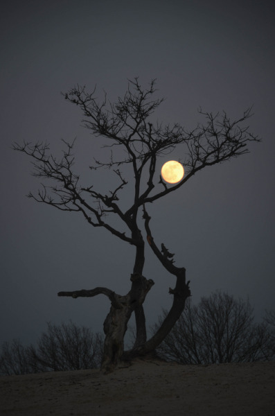 llbwwb:   Loonse en Drunense Duinen by night (by Nancy Carels)