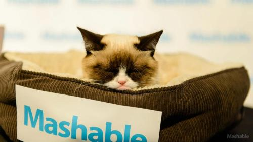 mashable:  The one and only Grumpy Cat was at SXSWi to ignore her adoring fans at the Mashable House. See the rest of the pictures here.   Whether she likes it or not (probably not), Internet star Grumpy Cat has become a pro at PR.