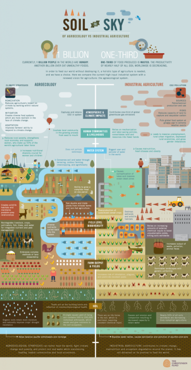 Infographic: Soil to Sky – Agroecology vs Industrial Agriculture | Farmhopping