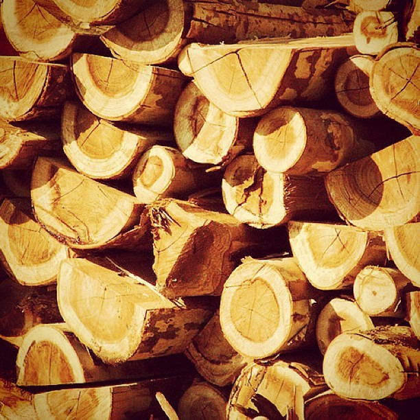 #wood #log #lumber #tree #natural #cut #texture #pile #piledup