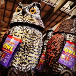 @niyati want this for your house? #scaryowl