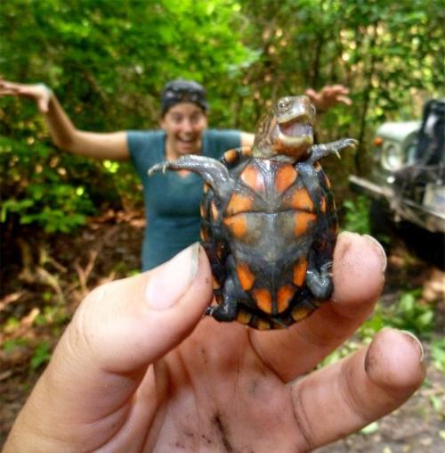 attheageofdecay:  yournameisshit:  turtlefeed:  katosk23:   Turtle is happy as fuck!   No kidding.  Can someone Photoshop this at the helm of the Titanic, with Leo holding it? Please? I don't have the skills…