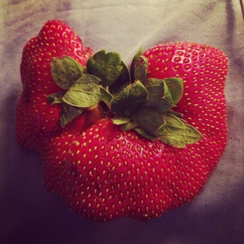 #siamese #strawberry