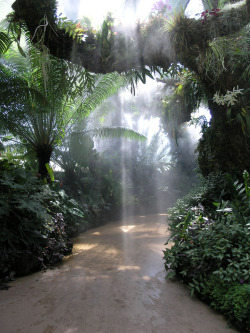 victimize:  Erik BuehlerGarden Mist, 2006  This is the tropical section of the Denver Botanical Garden