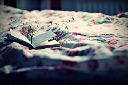 (via dream, bed, birds, book - inspiring picture on Favim.com)