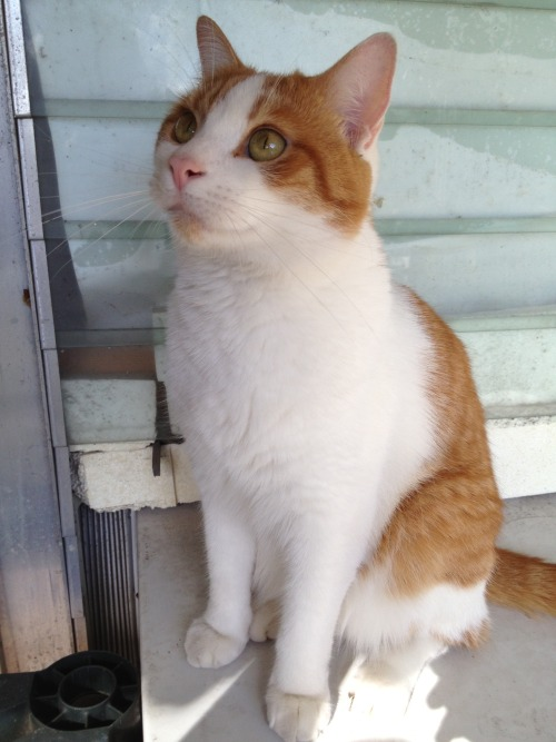 frommartyrdomtostartyrdom:  I have one handsome cat.