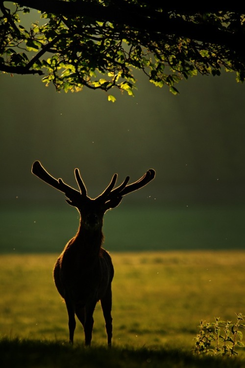 theanimalblog:  Backlit. Photo by Simon Roy