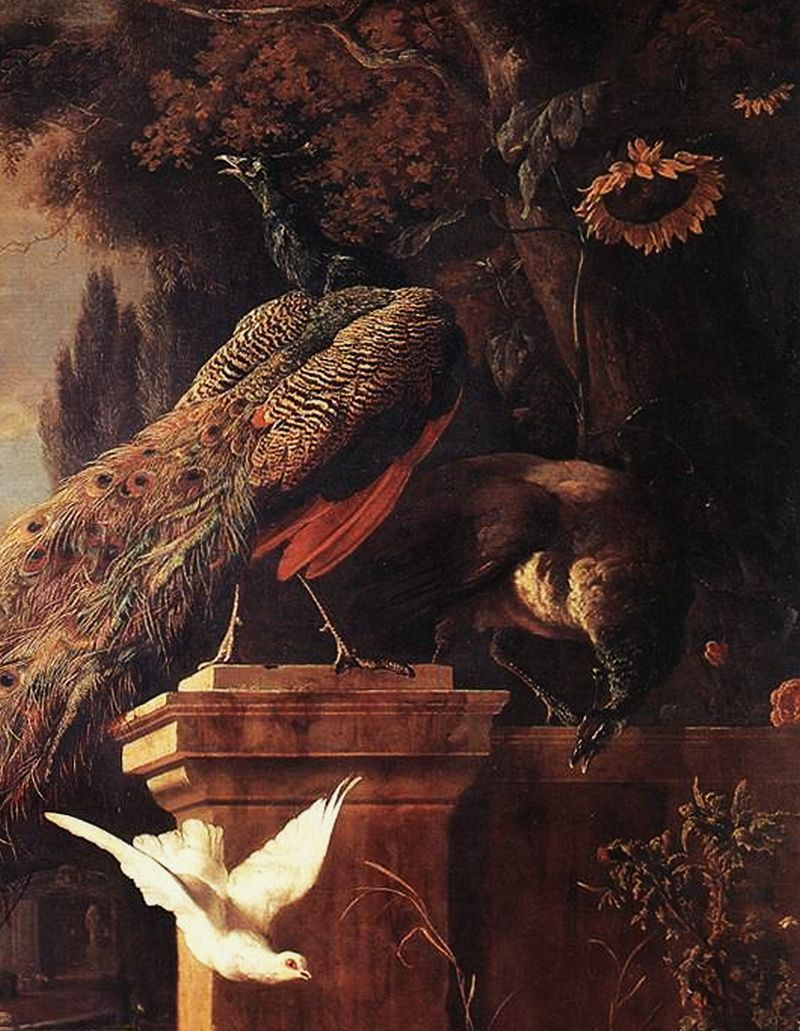Melchior HONDECOETER [Dutch Baroque Era Painter, 1636-1695] Peacocks and Ducks (detail), 1680 Oil on canvas, 211 x 177 cmWallace Collection, London