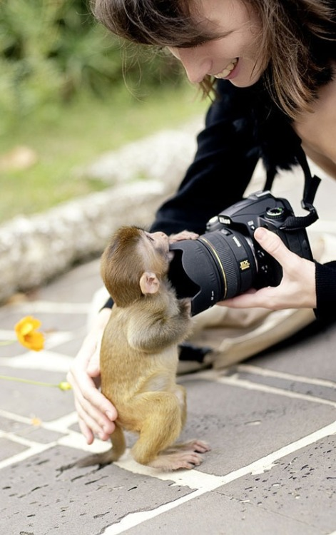anonymousscript:  I Love Your Camera | Animal Kingdom