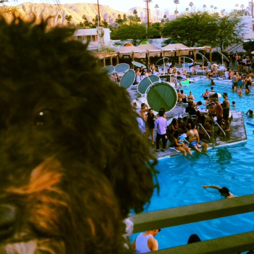 "petswhowanttokillthemselves:  ""Don't tell anyone I tinkled in the pool.""   Snax from me out in in Palm Springs, CA"