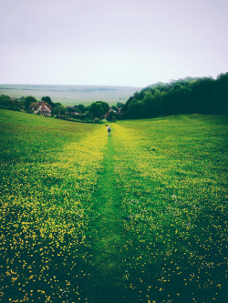Buttercup walk by Alex J White. Inspired by this poem from Willow Harth.