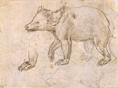 Leonardo da Vinci: Study of a Bear Walking