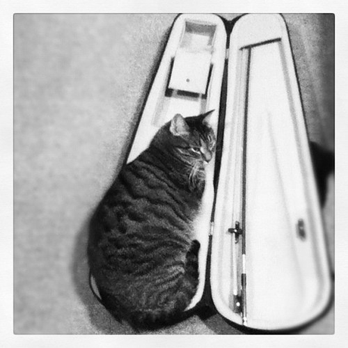 getoutoftherecat:  my violin looks different…