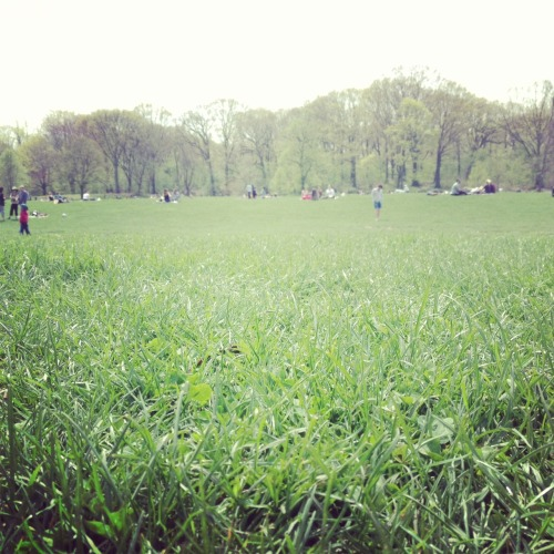 The Long Meadow in Prospect Park, the longest stretch of unbroken meadow in any U.S. park.