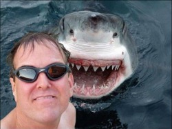 niknak79:  Photobomb level: Shark