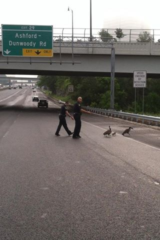 jaycrider75:  Police Escort Geese Crossing Highway  WSB-TV shared Dunwoody Police Department's photo. How about a LIKE for these two Dunwoody polic…  View Post